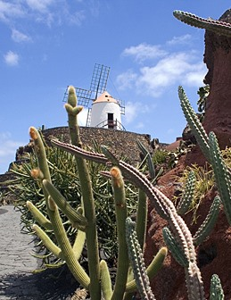 PLANT PLOT Botanical Boost For Cactus Garden