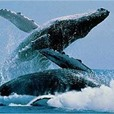 MAKING WAVES WWF Lobbies For Whale Sanctuary Off Lanzarote