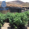 GRASSED UP British Owned Cannabis Farm Busted