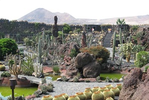 View across the Cactus Garden